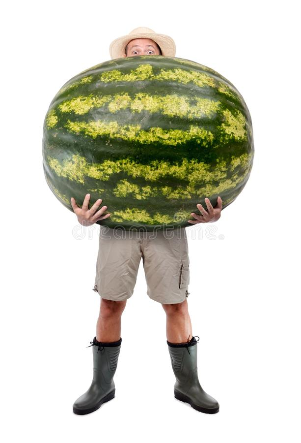 Funny gardener carrying a large watermelon. A farmer hold big water melon isolated on white background. Successful vegetable fruits grower. Large harvest of royalty free stock image