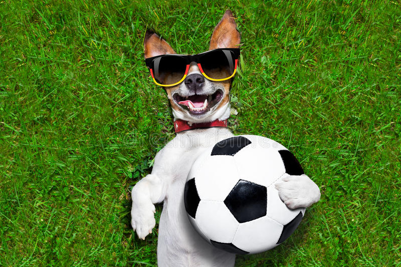 Funny german soccer dog royalty free stock photo