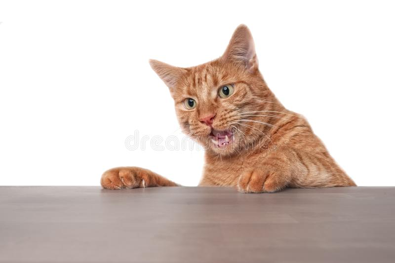 Funny ginger cat looking surprised at the table. royalty free stock image