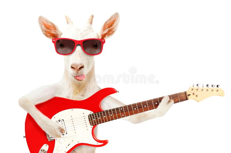 Funny goat showing tongue in sunglasses with electric guitar stock photos