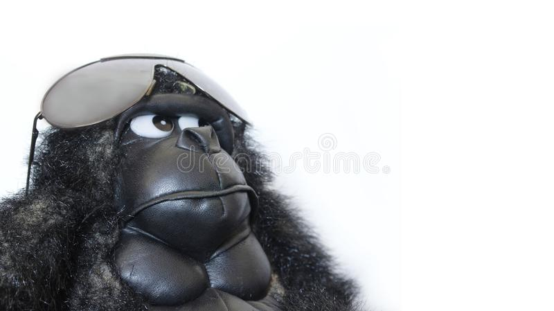 Funny gorilla with sunglasses. Detail royalty free stock photo