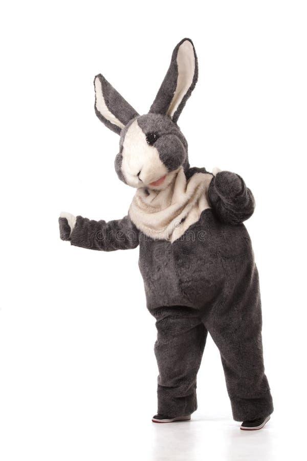 Funny grey rabbit. Isolated on white background stock images