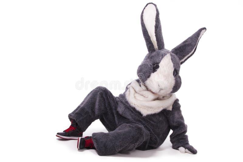 Funny grey rabbit. Isolated on white background royalty free stock photos