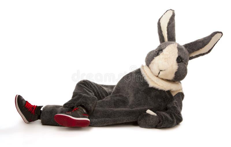 Funny grey rabbit. Isolated on white background stock photos