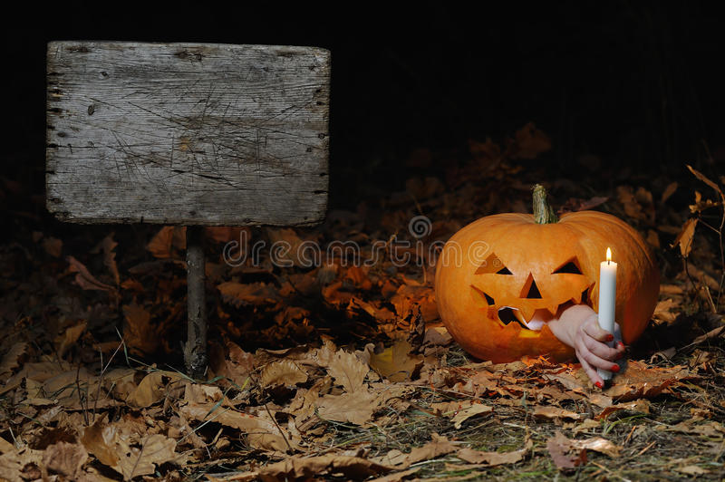 Funny Halloween. Funny pumpkin night in the forest, illuminating the road goes on holiday stock photography