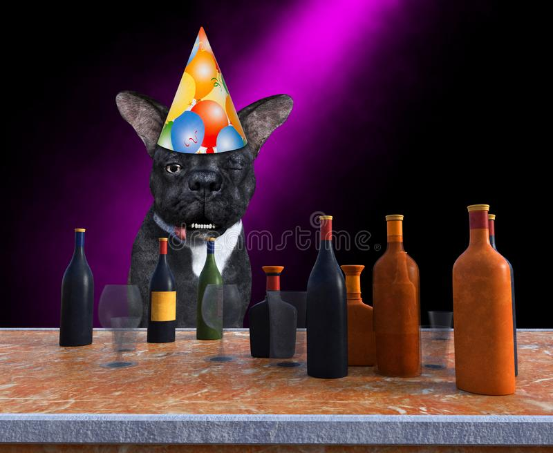 Funny Happy Birthday Party Dog, Drinking, Alcohol royalty free stock photo