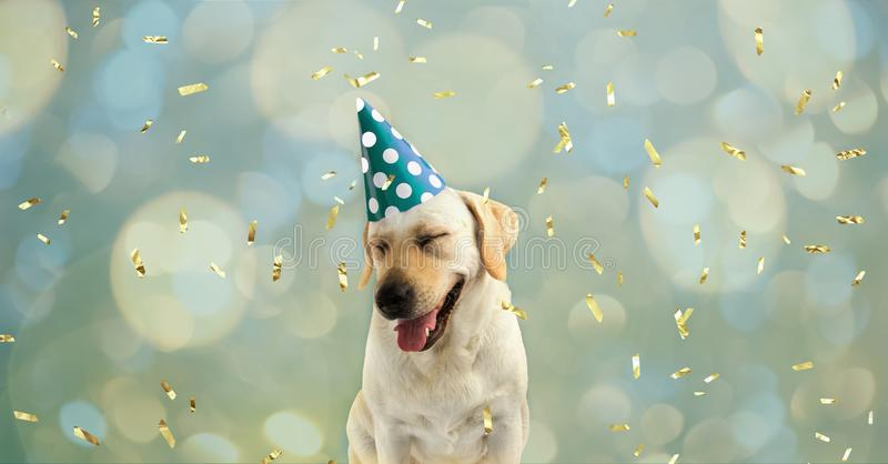 FUNNY AND HAPPY DOG CELEBRATING A BIRTHDAY OR NEW YEAR WITH A GREEN AND WHITE POLKA DOT PARTY HAT AND SMILING WITH CLOSED EYES. stock photo