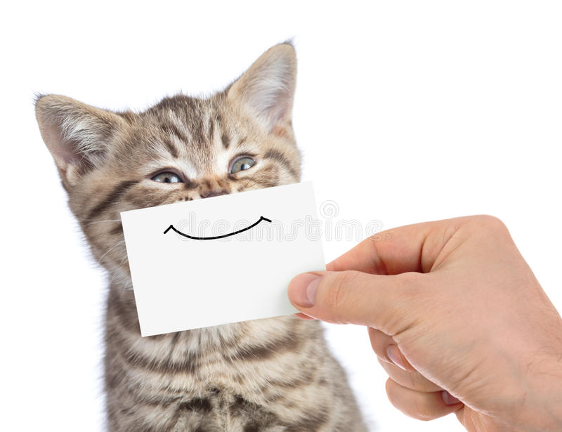 Funny happy young cat portrait with smile on cardboard isolated on white stock photography