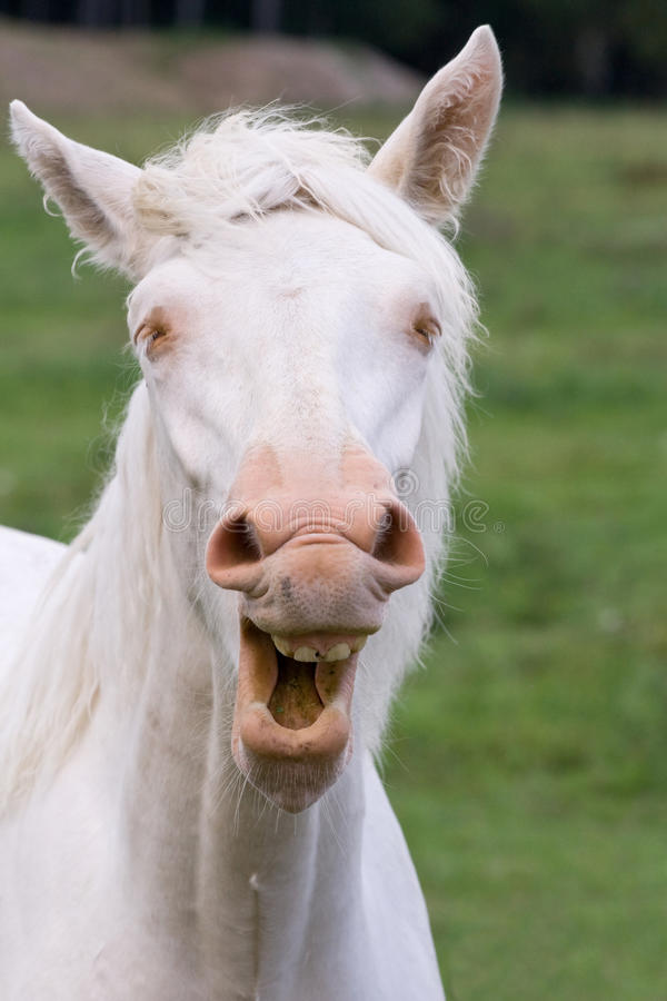 Download Funny Horse Royalty Free Stock Photos - Image: 25484278