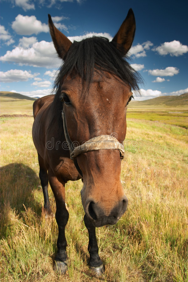 Funny horse. Wide angle photograph of horse at a grassland royalty free stock photos