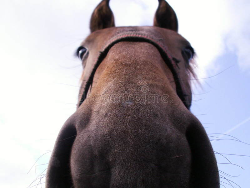 Funny horse stock photography