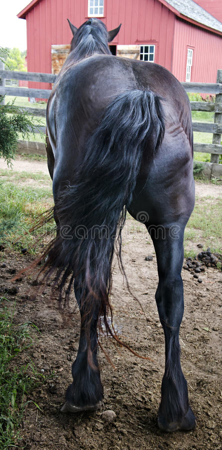 Free Funny Horse Butt, Backside, Rear, Stock Image - 32424541