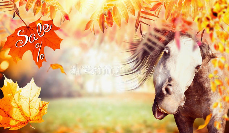 Funny horse face with autumn foliage, falling leaves and text Sale stock photos