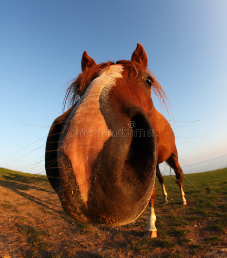 Funny horse by fisheye lens and blue sky royalty free stock photos