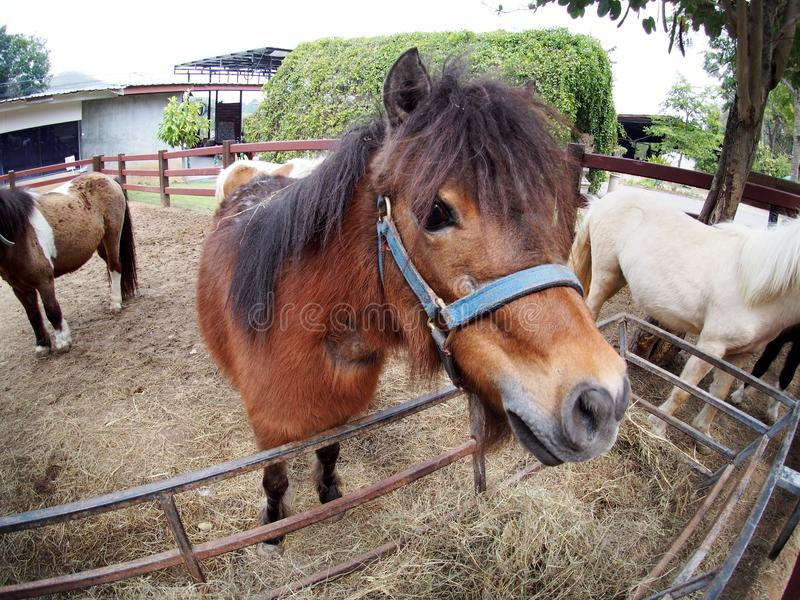Funny image of a small size cute little white brown horse pony stock photo