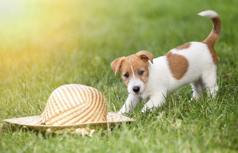 Dog puppy playing in summer stock image