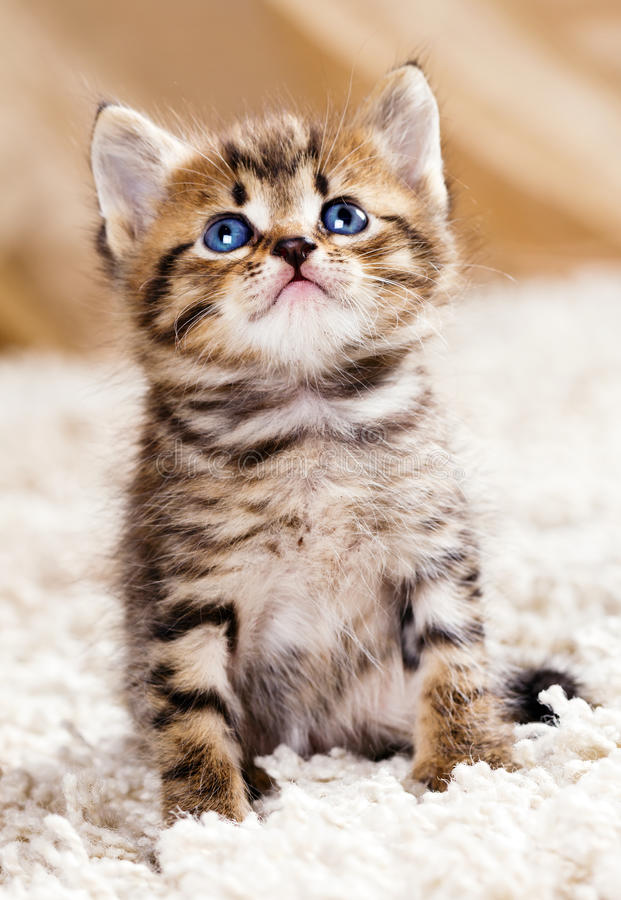 Download Funny kitten stock image. Image of kitty, expression - 21303447
