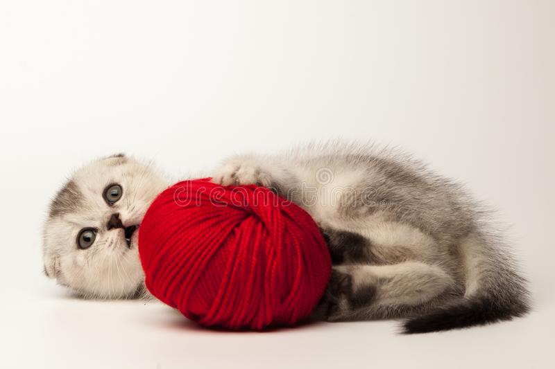 Funny kitten with ball of yarn on white background. stock photos