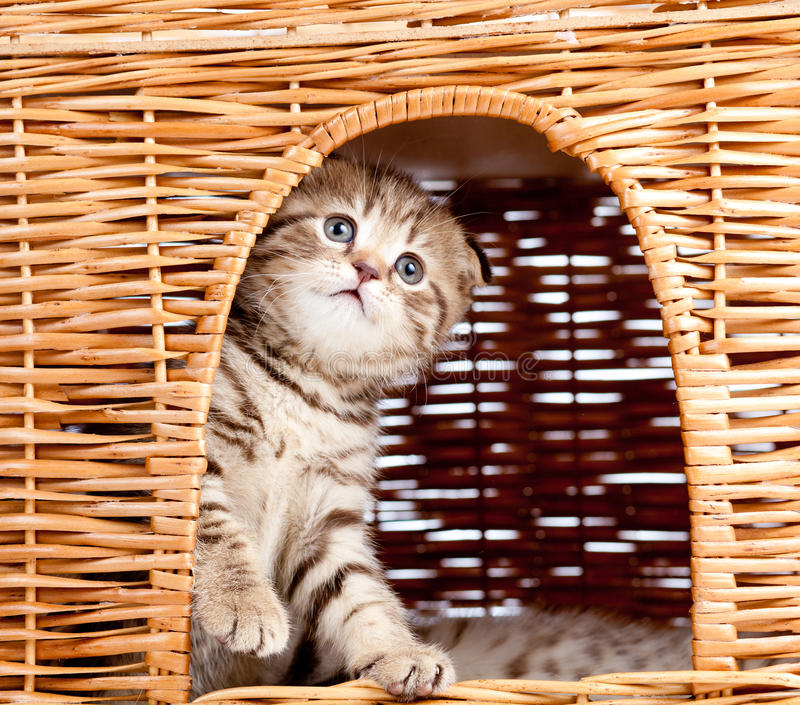Download Funny Kitten Sitting Inside Wicker Cat House Stock Photo - Image: 25122386