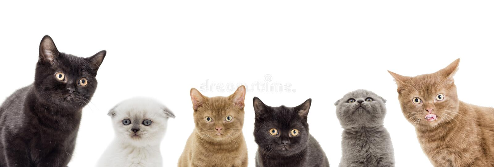 Funny kittens peeking. On a white background royalty free stock images