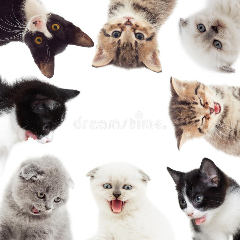 Funny kittens. Set of funny cats on a white background stock photos