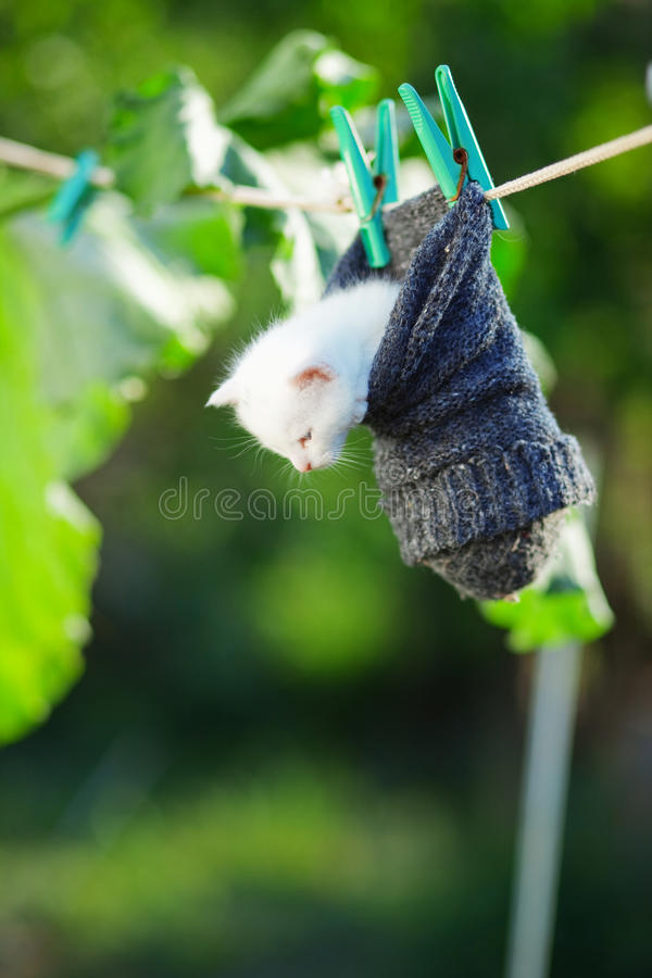 Funny kitty. Small funny white kitten outdoor in the garden stock photography