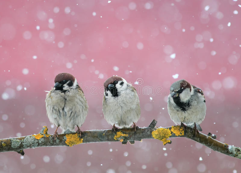 Funny little birds sitting on the branch in falling snow in the royalty free stock image