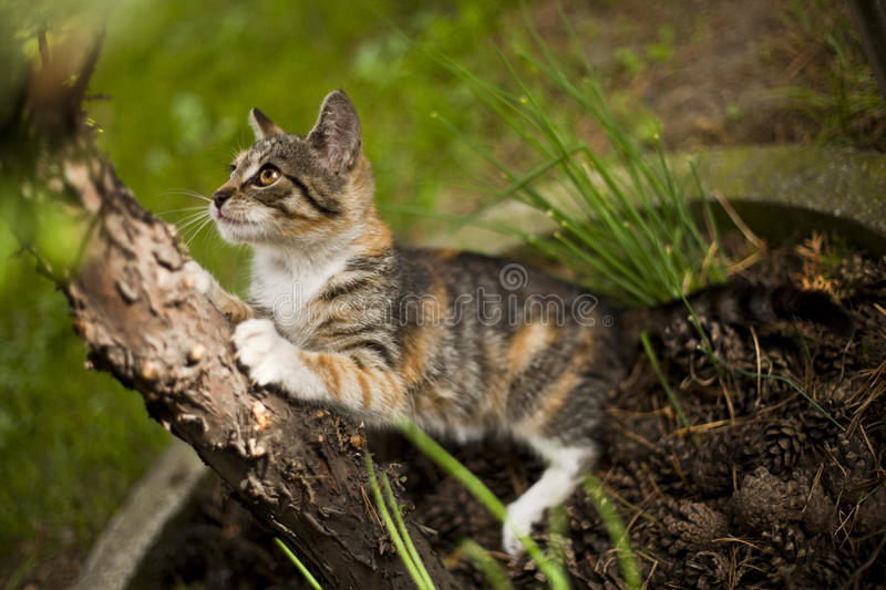 Funny little cat. Beautiful little cat playing in a garden stock images