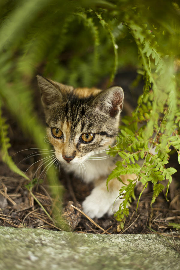 Funny little cat. Beautiful little cat playing in a garden royalty free stock image
