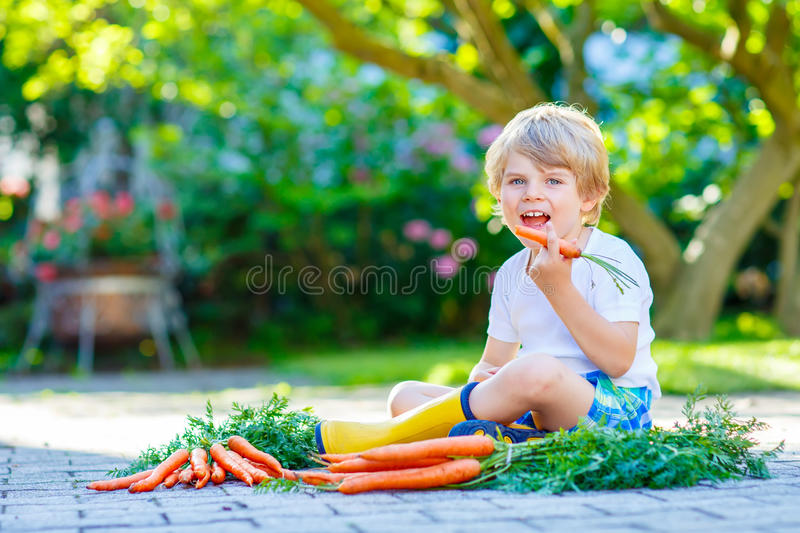 Funny little kid boy with carrots in garden stock photo