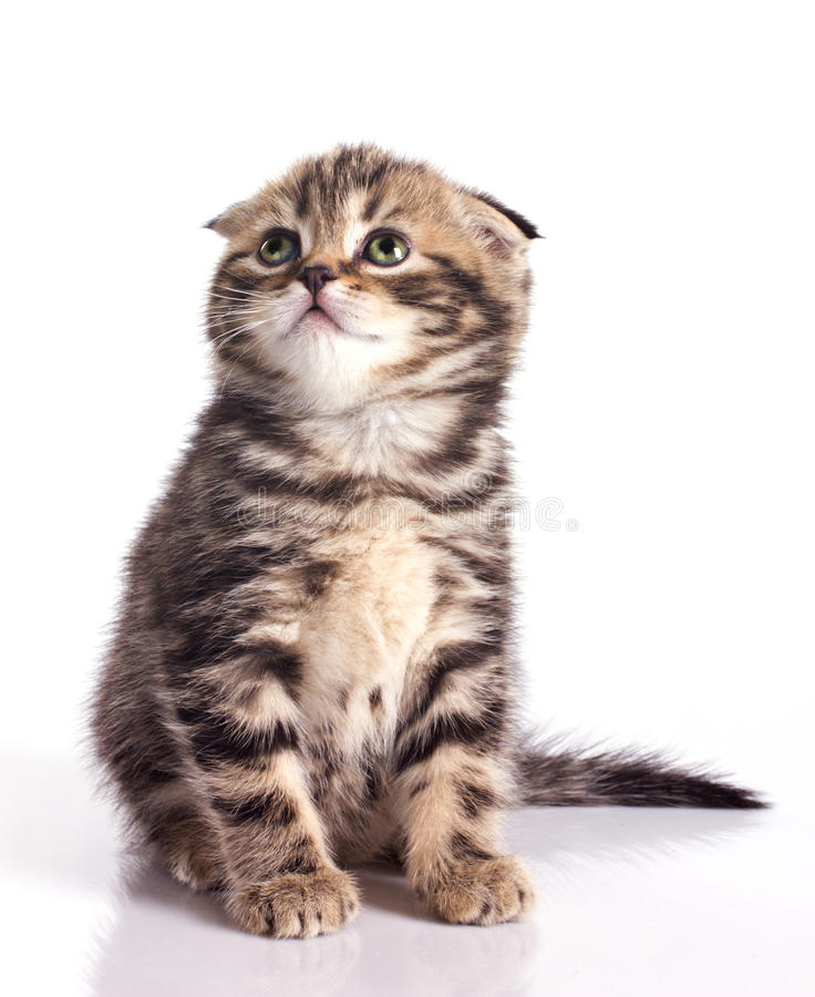Download Funny little kitten stock image. Image of claw, expression - 24339923