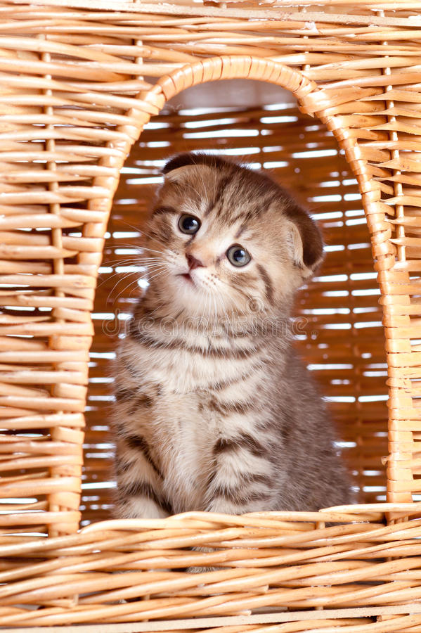 funny little kitten sitting inside cat house stock photography image 25122202. Black Bedroom Furniture Sets. Home Design Ideas