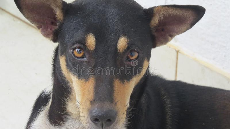 Funny looking adorable dog closeup royalty free stock image