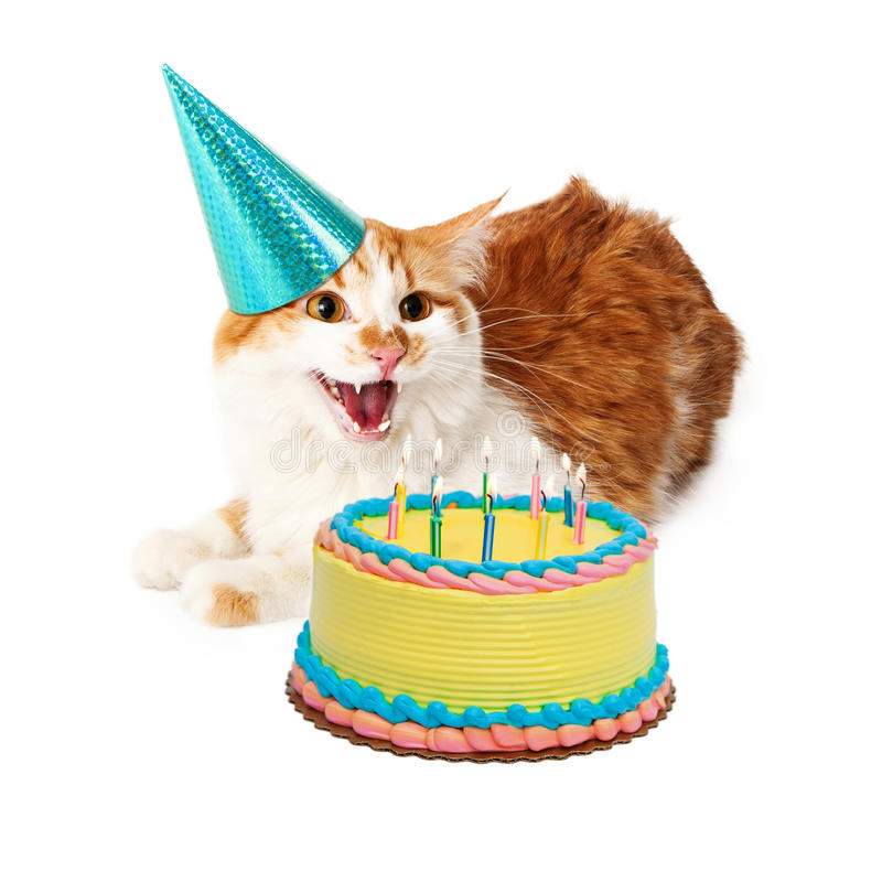 Funny Mad Birthday Cat With Cake. Funny photo of an angry cat hissing while wearing a birthday hat and laying next to a cake with candles stock photo