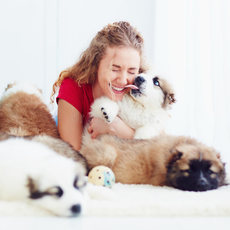 Funny moment of cute puppy licking laughing girl. Funny moment of cute puppy licking laughing young girl royalty free stock images