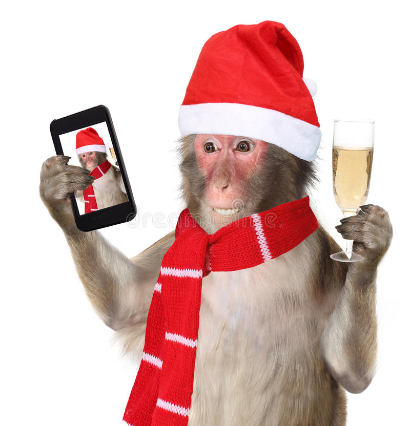 Funny monkey with christmas santa hat taking a selfie and