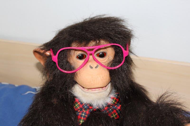Funny monkey royalty free stock photography