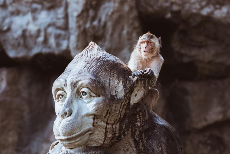 Funny monkey sits on monkey monument royalty free stock images