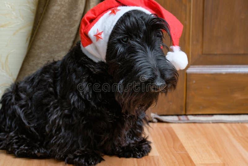 Funny naughty dog in Santa hat stock image