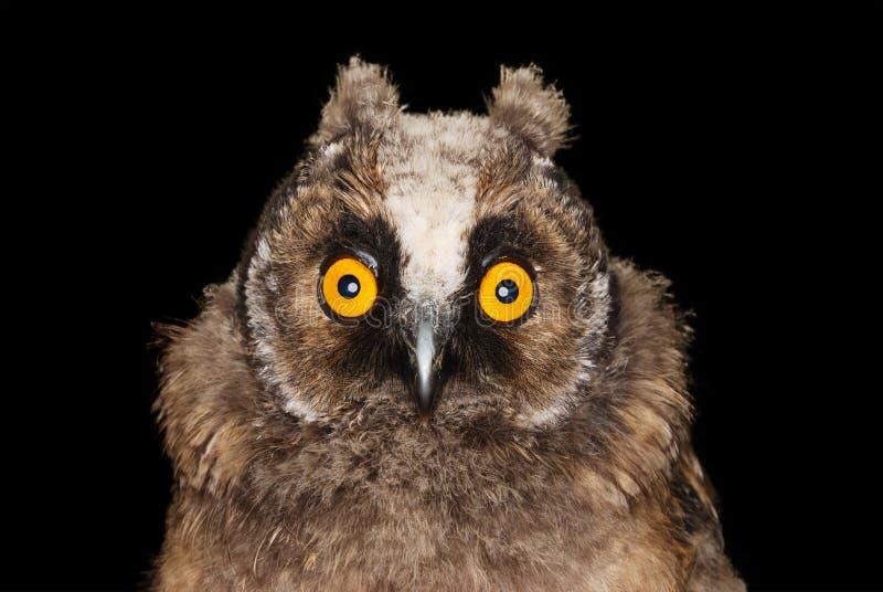 Funny Owl stock photos