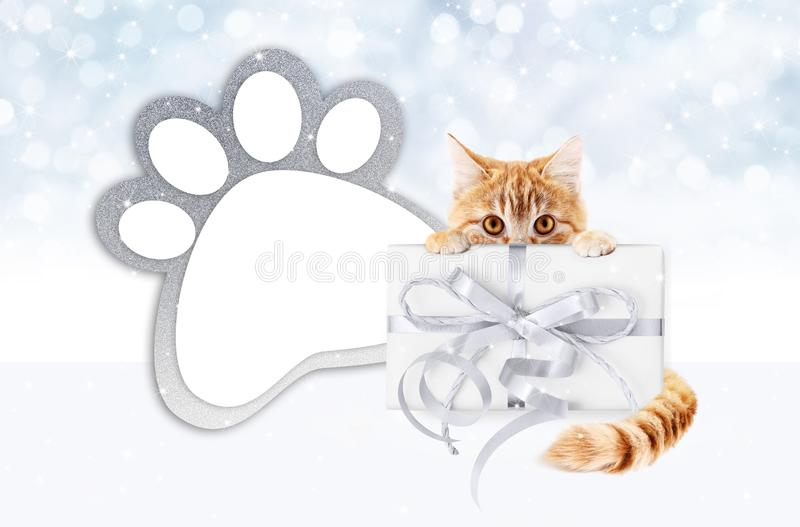Funny pet cat showing a gift box with silver ribbon bow and paw royalty free illustration