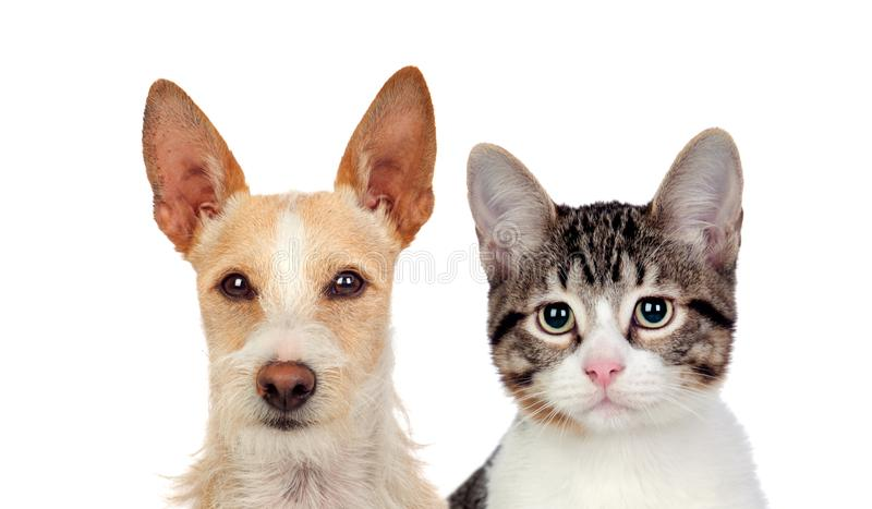 Funny portraits of a dog and a cat looking at camera stock photography