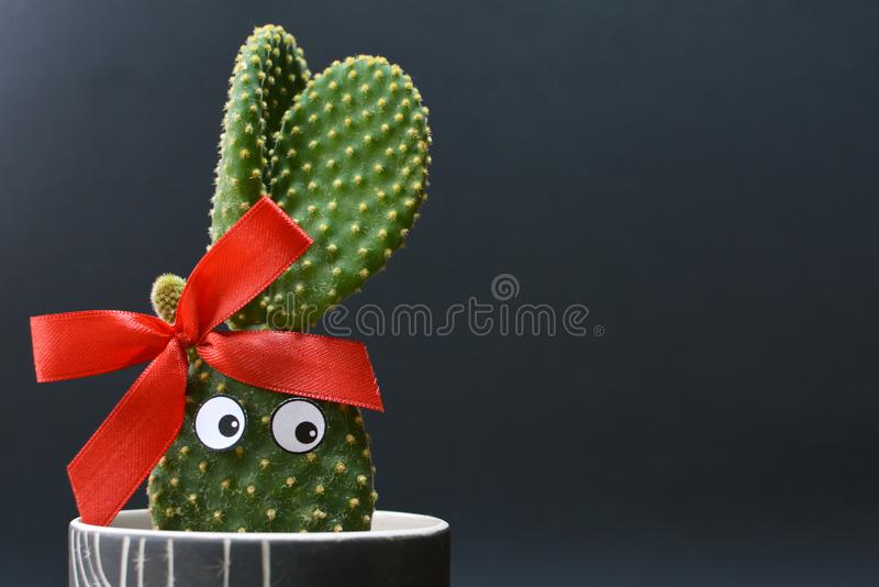 Funny potted Opuntia microdasys bunny ears cactus with googly eyes in front of dark background. Funny potted Opuntia microdasys bunny ears cactus with googly royalty free stock image