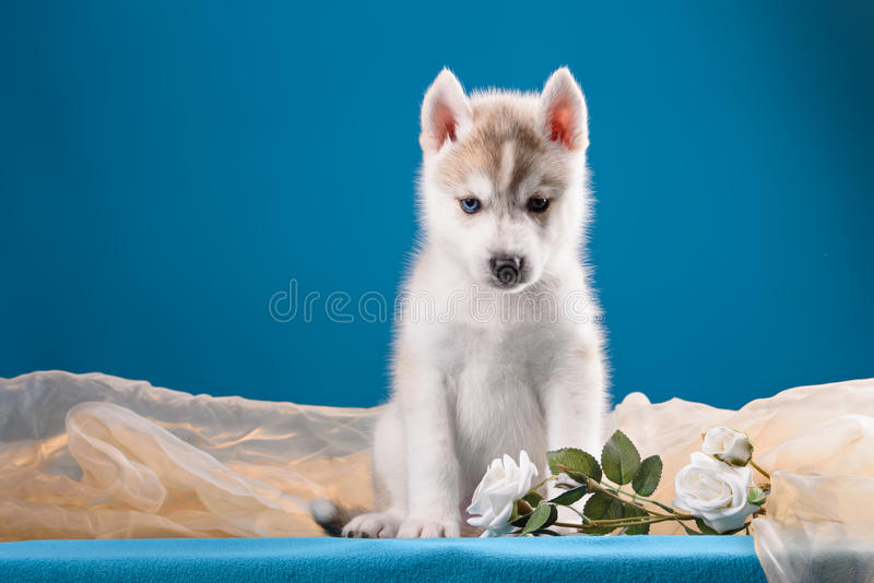 Funny puppy with a bouquet of flowers. Wishes happy holidays royalty free stock photography