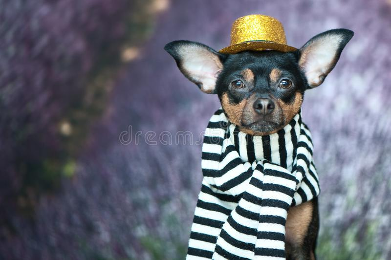 Funny puppy in the image of a French mime, a comedian. France Pa royalty free stock image