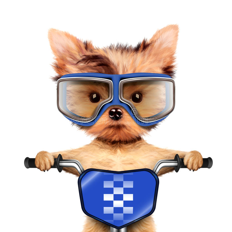 Funny racer dog with bike and aviator googles royalty free stock image