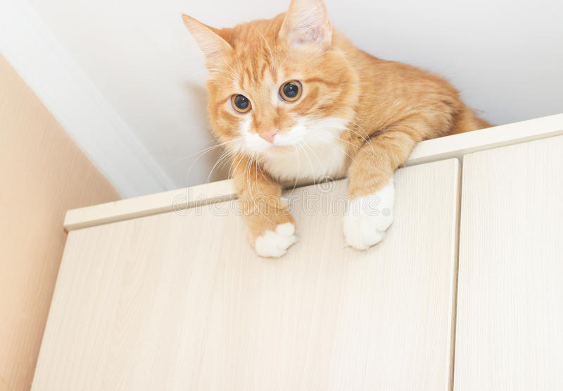 Funny red cat stock photography