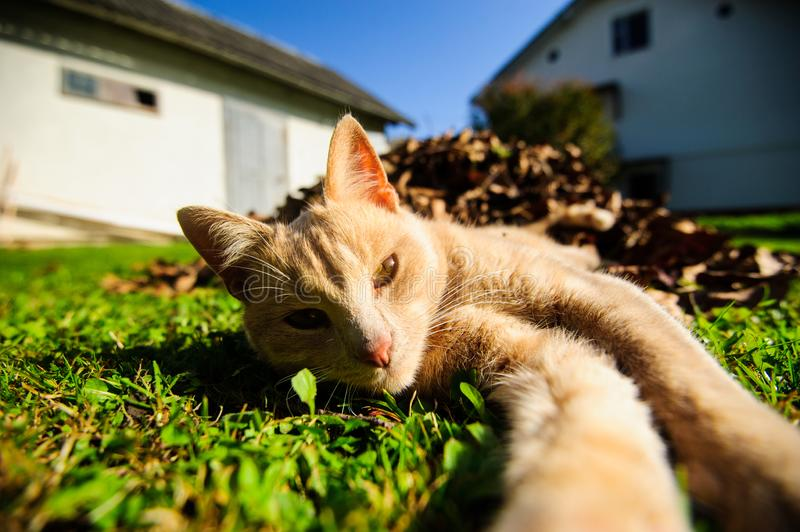 Funny red-haired cat doing selfie stock photos