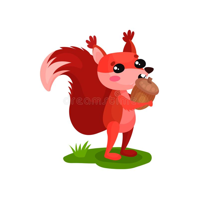 Funny red squirrel standing on green grass and eating acorn. Small wild animal with fluffy tail and tassels on ears royalty free illustration