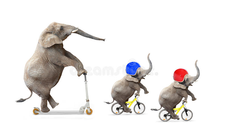 Funny riders. stock photo